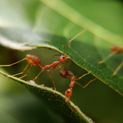 Did You Know Ants communicate with each other using chemical language?