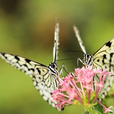 Butterflies Can Taste The Food With Their Feet.