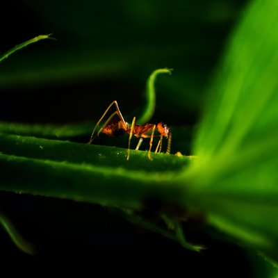 Did you know there are about 12,000 species of ants around the world?