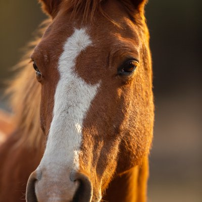 50+ Interesting Fun Facts About Horses